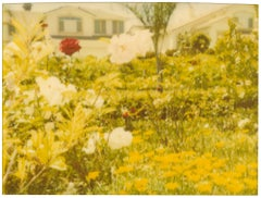 Neighborhood Garden (Suburbia), analog, mounted - Contemporary, Polaroid, Color