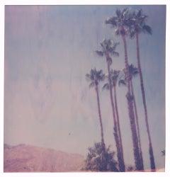Palm Springs Palm Trees V (Californication)
