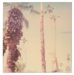 Palm Springs Palm Trees VI (Californication) - Polaroid, Contemporary, Color