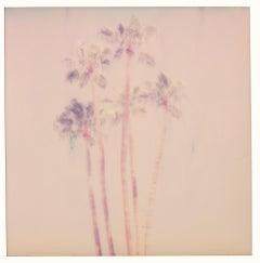 Palm Springs Palm Trees VII (Californication) - Polaroid, Contemporary, Color