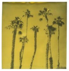 Palm Springs Palm Trees VIII (Californication) - Polaroid, Contemporary, Color