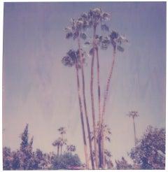 Palm Springs Palm Trees XI (Californication) - Polaroid, Contemporary, Color