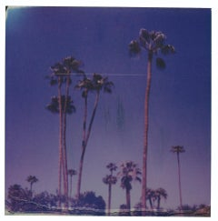 Palm Springs Palm Trees XII (Californication) - Polaroid, Contemporary, Color