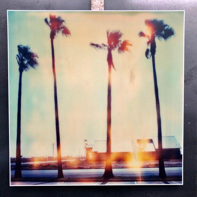 Palm Tree Restaurant Contemporary 21st Century Polaroid Landscape Photo