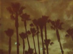 Palm Trees at Night -Stranger than Paradise