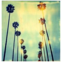 Palm Trees on Wilcox (150x150cm) -  Contemporary, Polaroid, 20th Century