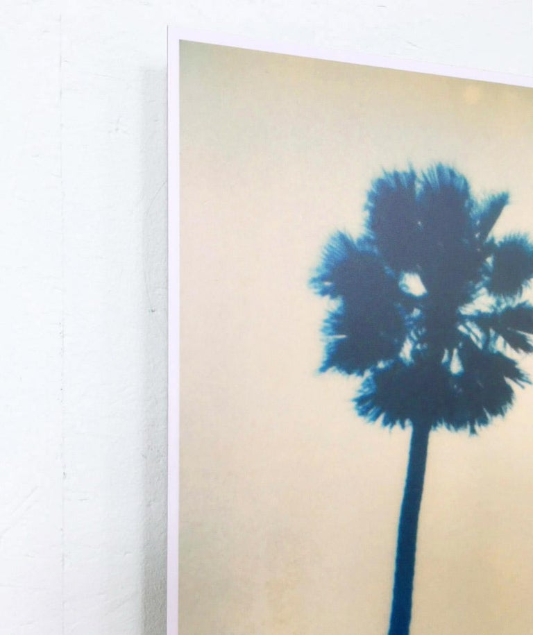 Palm Trees on Wilcox / Contemporary, Polaroid, Photograph, Analog For Sale 2