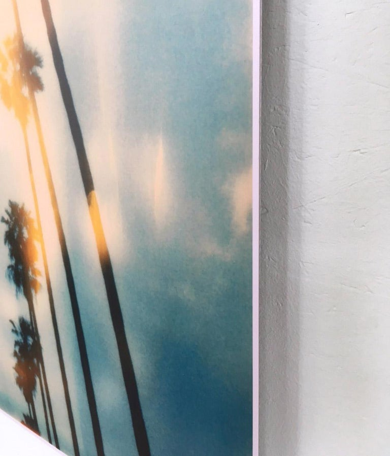 Palm Trees on Wilcox / Contemporary, Polaroid, Photograph, Analog For Sale 4