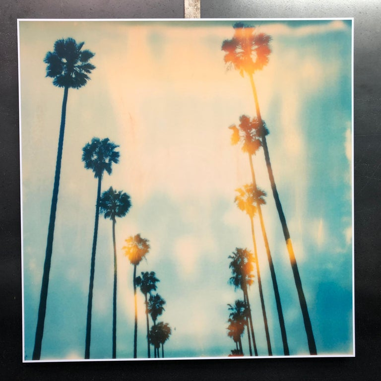 Palm Trees on Wilcox / Contemporary, Polaroid, Photograph, Analog For Sale 5