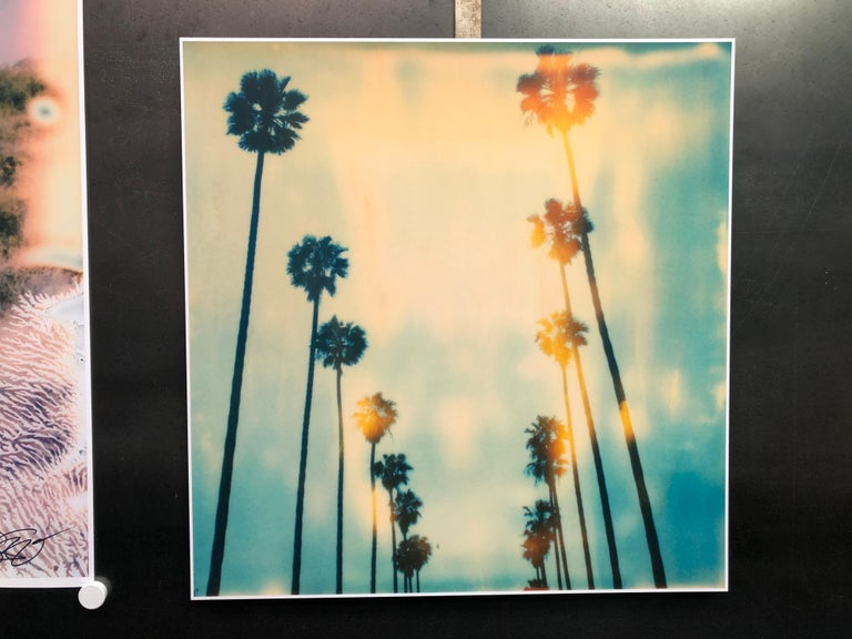 Stefanie Schneider Color Photograph - Palm Trees on Wilcox / Contemporary, Polaroid, Photograph, Analog