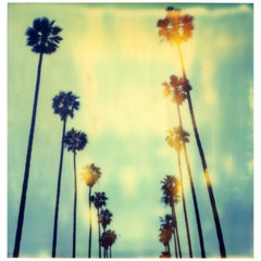 Palm Trees on Wilcox - last Edition AP 2/2 - Contemporary, Polaroid, Analog