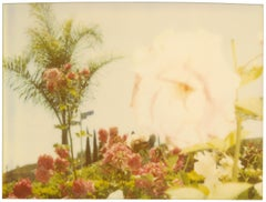 Pink Rose (Suburbia), analog, mounted