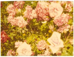 Rosegarden II (Suburbia), analog, mounted - 21st Century, Polaroid, Contemporary