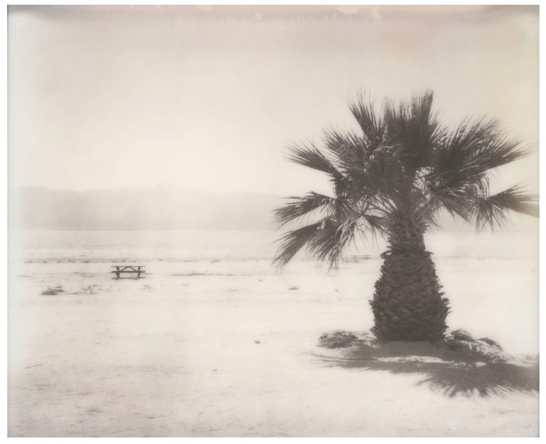 Stefanie Schneider Black and White Photograph - Salton Sea Palm Tree (California Badlands) - Polaroid, Contemporary, Landscape