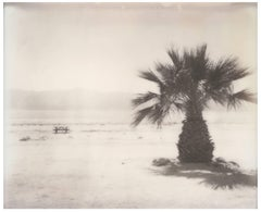 Salton Sea Palm Tree (California Badlands) - Polaroid, Contemporary, Landscape