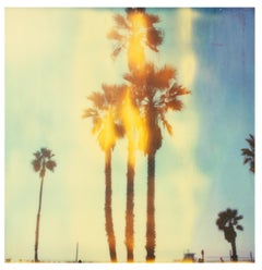 Santa Monica Palm Trees II - Stranger than Paradise