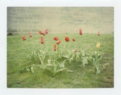 Springtime (Paris) - analog, Polaroid, Contemporary