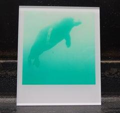 Stefanie Schneider Minis - Skywhale (Stay) - Polaroid, Contemporary, Color