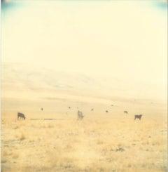 Untitled - Contemporary, 21st Century, Polaroid, Landscape Photography