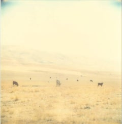 Untitled - Contemporary, 21st Century, Polaroid, Landscape Photography
