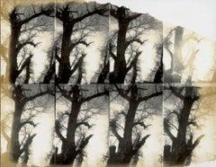 Untitled Sequence (Stranger than Paradise) - Polaroid, Landscape Photography