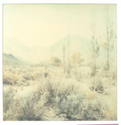 Wastelands - Polaroid, Expired. Contemporary, Color