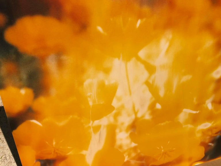 Yellow Flower  - The Last Picture Show, analog, 128x126cm, mounted - Contemporary Photograph by Stefanie Schneider