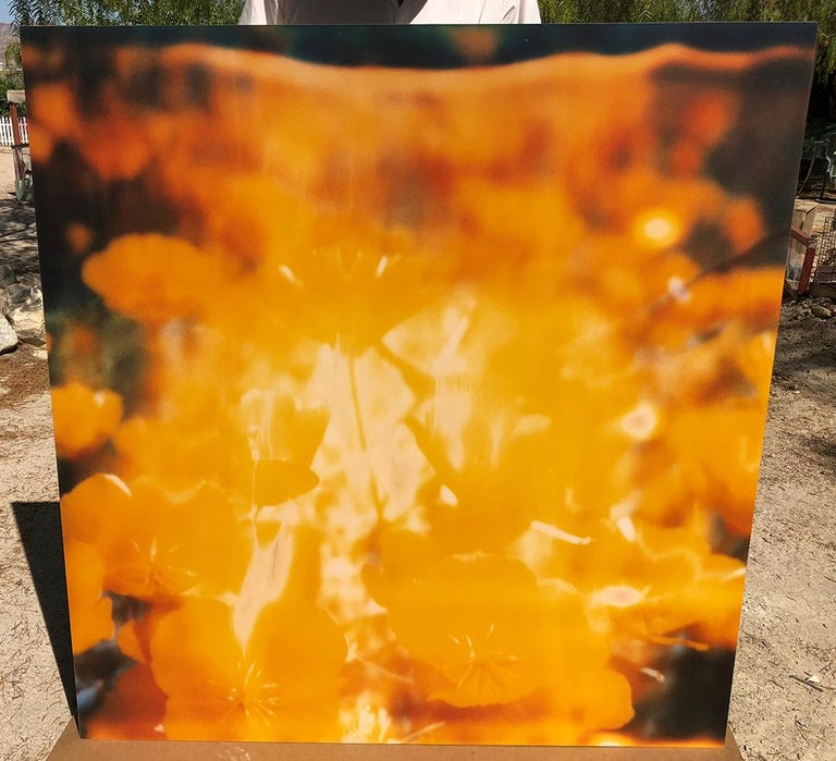Yellow Flower  - The Last Picture Show, analog, 128x126cm, mounted For Sale 4