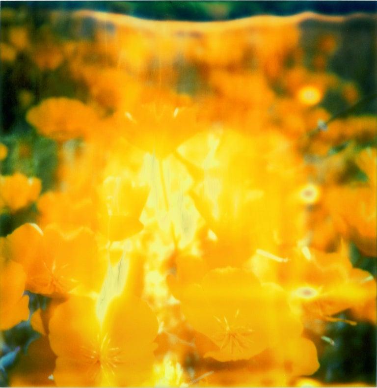 Stefanie Schneider Still-Life Photograph - Yellow Flower  - The Last Picture Show, analog, 128x126cm, mounted