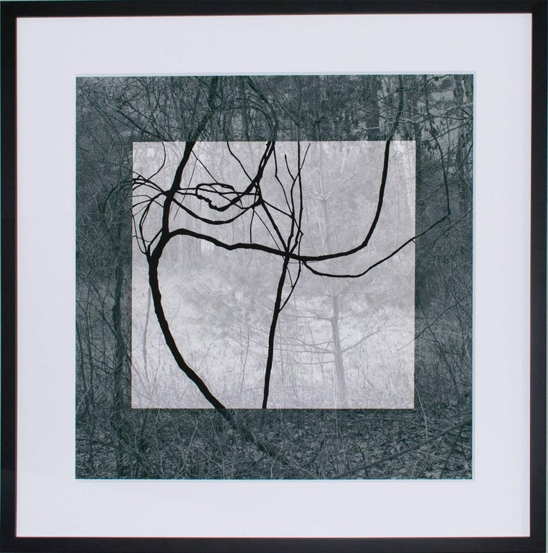 Blue Black (Contemporary Landscape Photo with Lyrical Vines and Geometric Shape) - Photograph by Stephanie Blumenthal