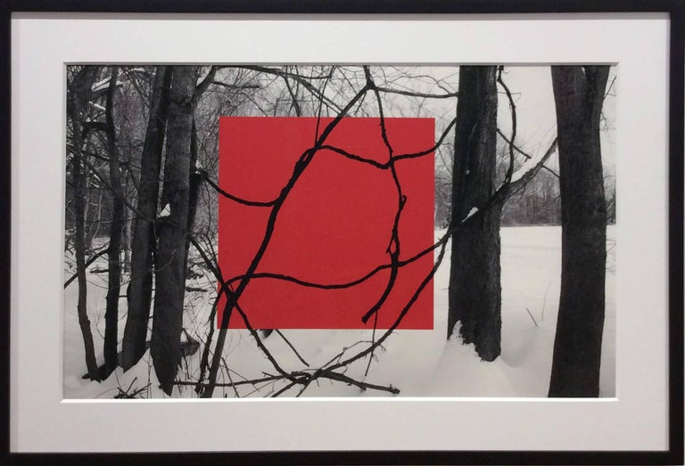 Red Square (Modern Abstract B&W Gestural Tree Outlines with Graphic Red Square) - Photograph by Stephanie Blumenthal