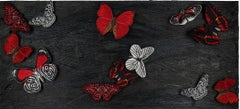 Midnight Butterfly Study, Embroidery Assemblage