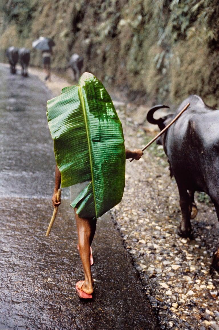 Steve McCurry Color Photograph - Boy with Banana Leaf, Nepal