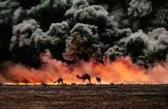 Camel and Oil Fields, Al Ahmadi, Kuwait, 1991