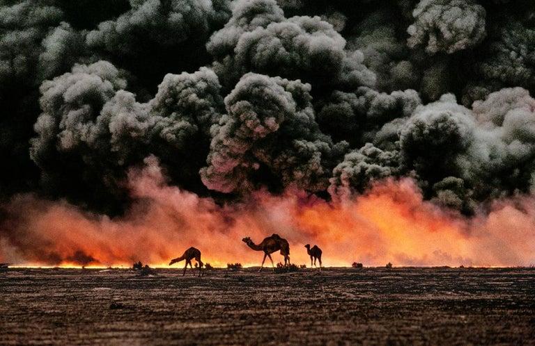Steve McCurry Color Photograph - Camel and Oil Fields, Al Ahmadi, Kuwait, 1991