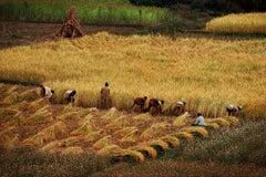 Steve McCurry 'Kathmandu Valley Harvest'