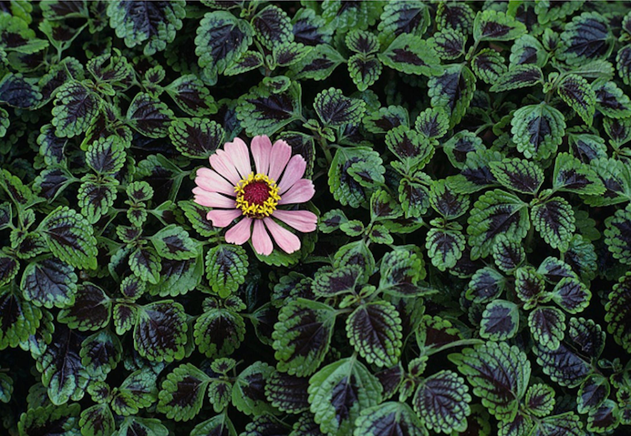 Monsoon Flower