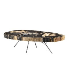 Stoned Petrified Wood Black Coffee Table on Stainless Steel Base