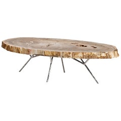 Stoned Petrified Wood Coffee Table on Stainless Steel Base