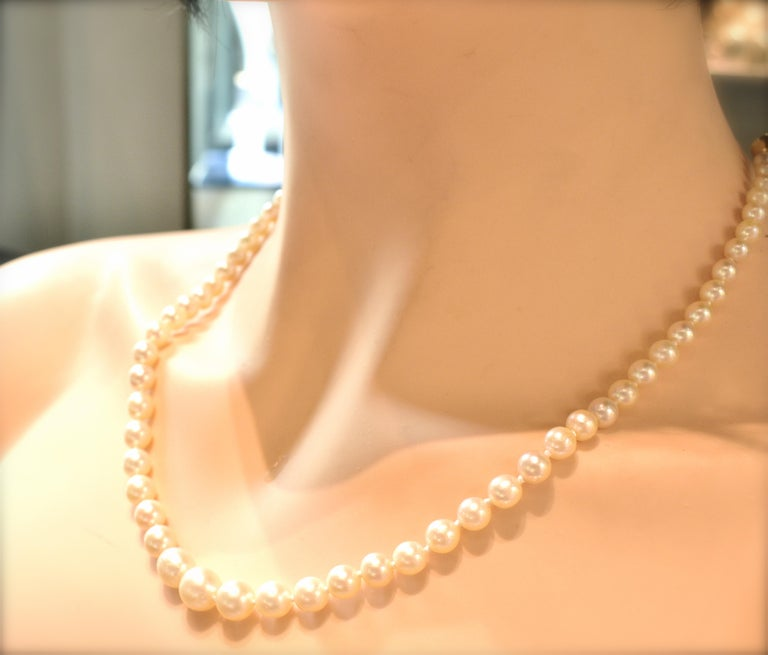 Strand of Fine Cultured Akoya Pearls with a Gold Clasp For Sale 1