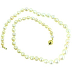 Strand of Fine Cultured Akoya Pearls with a Gold Clasp