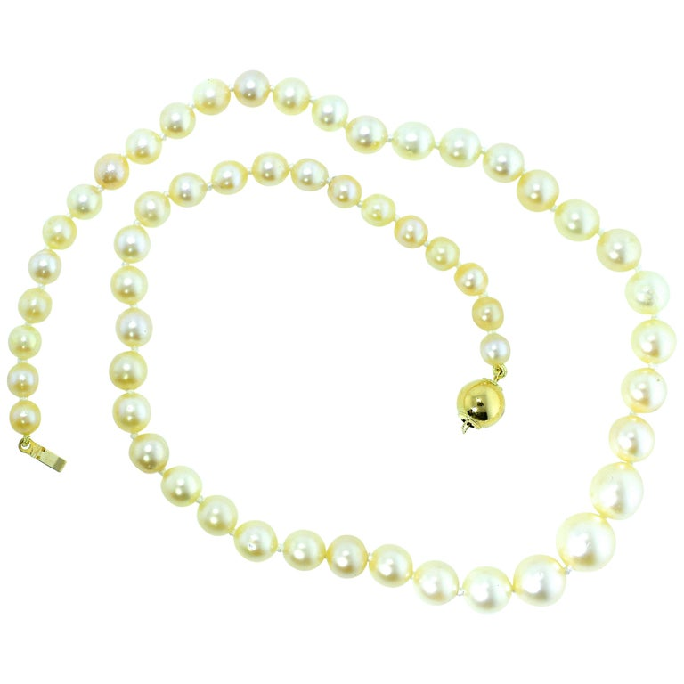 Strand of Fine Cultured Akoya Pearls with a Gold Clasp For Sale