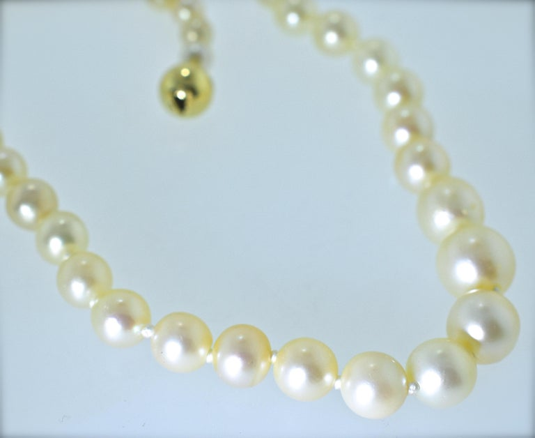 This strand is 16 inches long, finished with a yellow gold clasp.  The 54 matching pearls range in size from 5.25 mm. up to 9.37 mm.  The pearls are recently strung and has been knotted between each pearl.