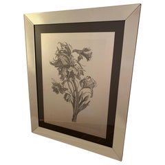 Striking Botanical Drawing Print in Flashy Mirrored Frame