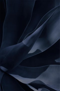 ' Agave II Night Garden '  Signed Limited Edition GIANT Oversize print