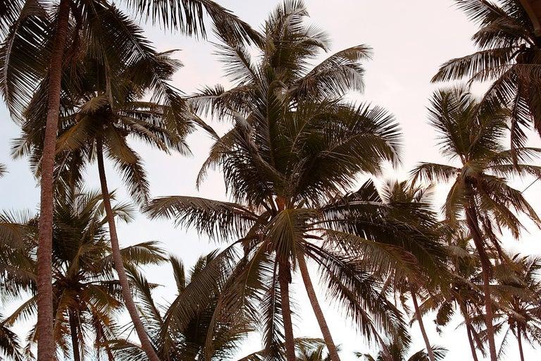 Stuart Möller Landscape Photograph - ' Palms Composition ' Oversize Limited Edition Signed print