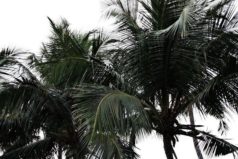 Stuart Möller Color Photograph - ' Tijuana Palms '  Signed Limited Edition Oversize print