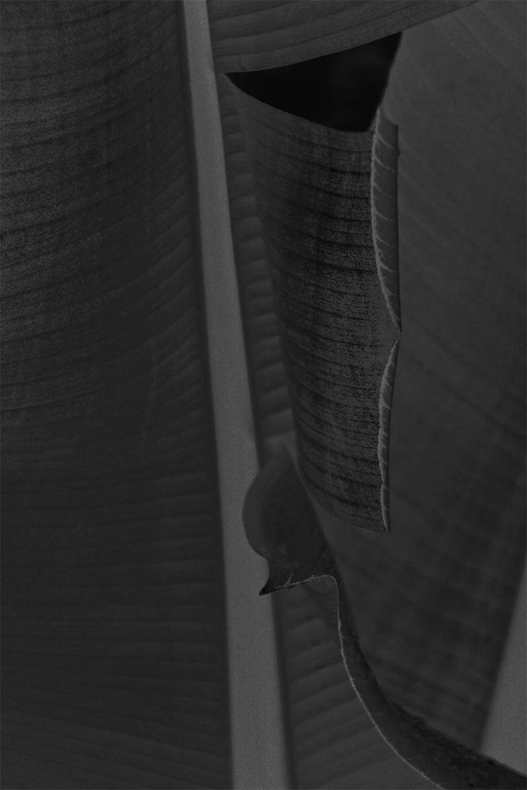 Stuart Möller Black and White Photograph - 'Black Leaf' Hand Signed Limited Edition