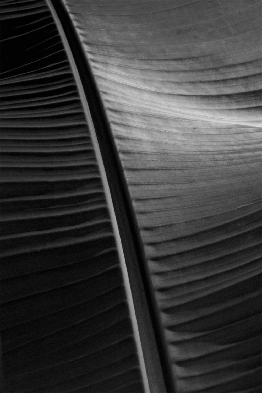'Dark Leaf'   Oversize Archival Pigment Print - Signed Limited Edition OVERSIZE