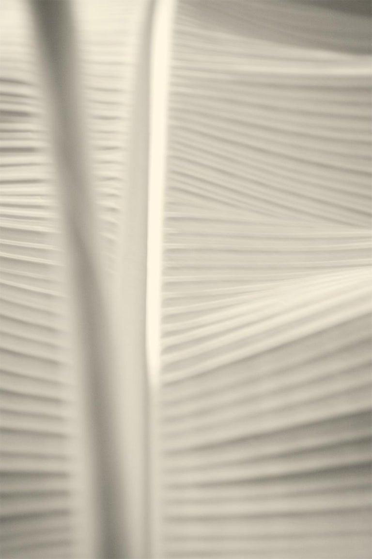 Stuart Möller Still-Life Photograph - 'White Leaf'   Oversize Archival Pigment Print - Signed Limited Edition